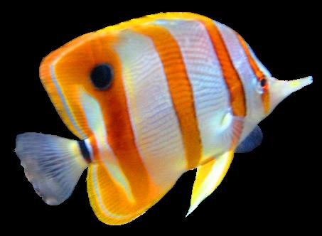The Fish Aquarium Pet Shop Pet Store Grooming