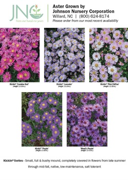 Aster Chart