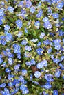 /Images/johnsonnursery/product-images/Veronica Georgia Blue3030701_6db5au6uc.jpg