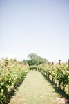 The Vineyards At Chappel Lodge - 7