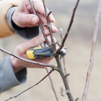 Good read on pruning!